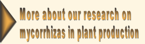 research paper on biofertilizer Journal of nano research  which indicated that the strain can be used as a nonchemical alternative biofertilizer  showing 1 to 2 of 2 paper titles.
